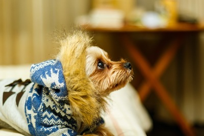 暖かそうな冬服を着ている犬
