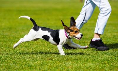 走る人と犬