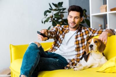 ソファーに座ってテレビを見る男性とビーグル犬