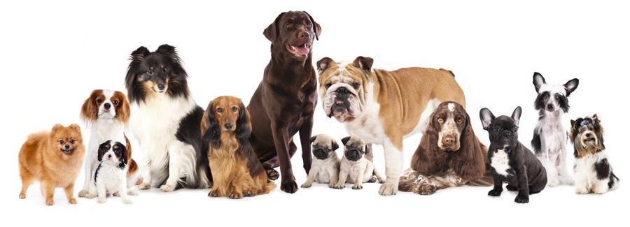 いろいろな犬種の写真