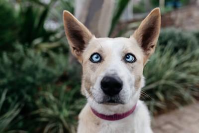 SNSに載った犬の顔写真