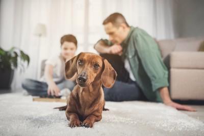 飼い主と一緒にリビングでくつろぐ犬