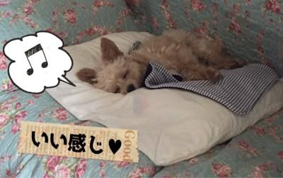 #いい感じ、寝る犬#