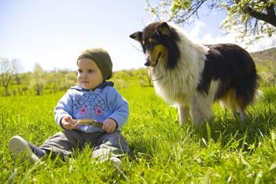 幼い子と見守る犬