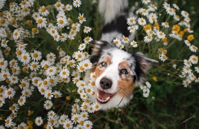 花畑の中にいる犬