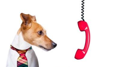 外れた受話器を見る犬