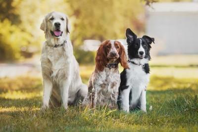 3頭の犬が座っている