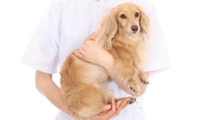 プロに抱かれる犬