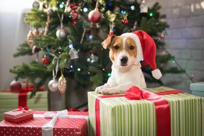 クリスマスツリーの前に置かれたプレゼントとサンタの帽子を被った犬