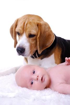 犬と寝る赤ちゃん