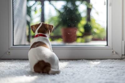ドアの前にいる犬
