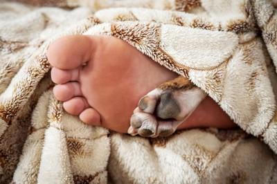 布団から出る人と犬の足