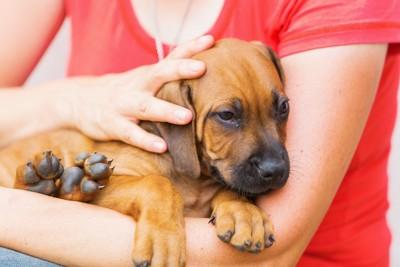 抱っこされて撫でられている犬