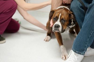 病院の廊下で固まる犬