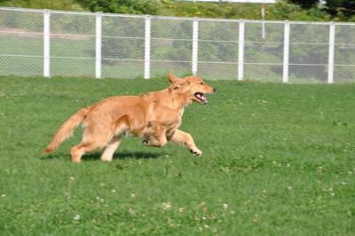 走っている犬の写真