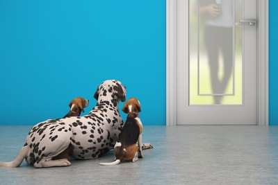 玄関で飼い主の帰宅を待つ3匹の犬