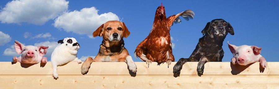 横に並んだ犬とブタとニワトリとうさぎ