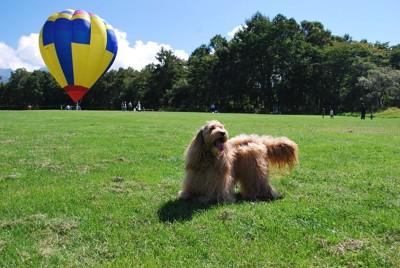 気球と青空と犬