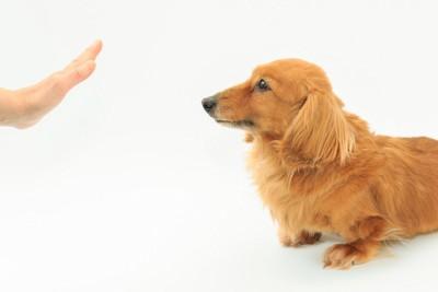 マテをしている犬