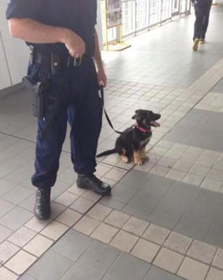 警察の男性とお座りをしている子犬