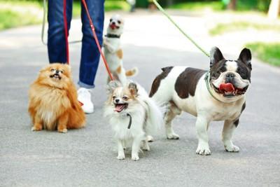 お散歩中の4頭の犬、ジーンズを履いた人の足元