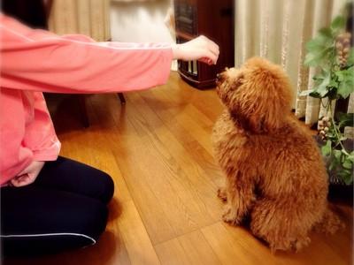 犬を誘導する