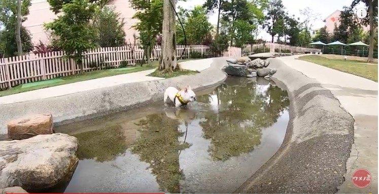 じゃぶじゃぶ池