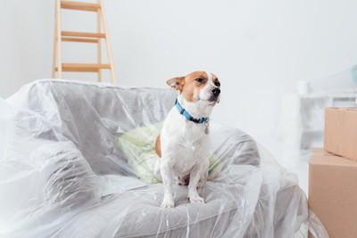 ビニールのかかったソファーに座る犬