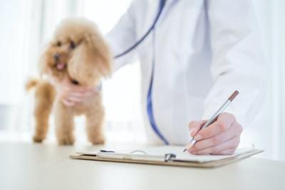 犬を診察してカルテを記入する獣医師