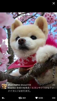 桜と俊介くん