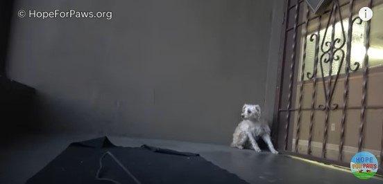 逃げる方向を見る犬