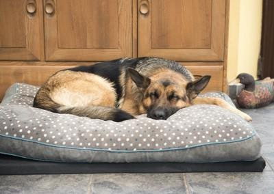 ベッドの上で丸くなって寝ている犬