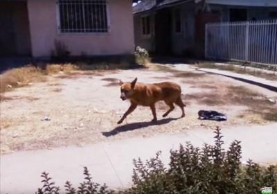 小走りする犬