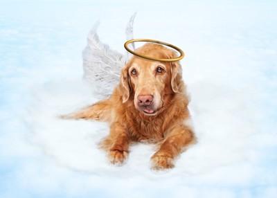 天使の姿をした犬