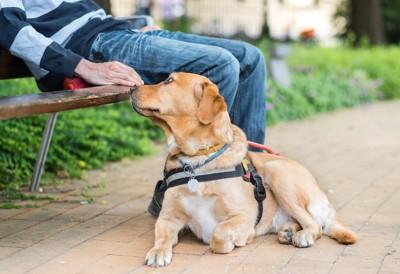 ベンチで休む介助犬とオーナー