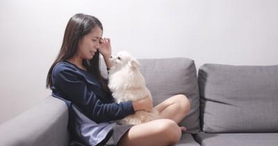 泣く女性の膝の上で見つめる白い犬