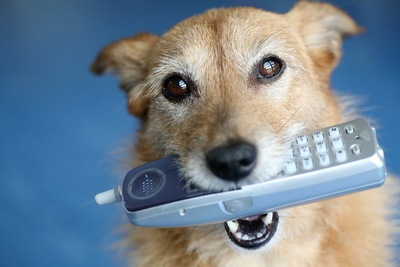 電話を咥えた犬