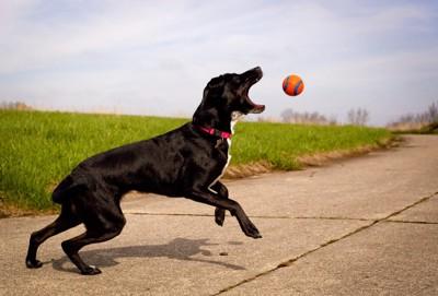 ボールで遊ぶ黒い犬