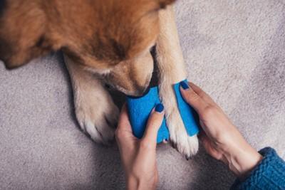 足に包帯を巻かれている犬