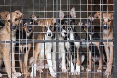 檻の中に入っている犬達