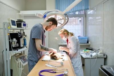 病院で犬の治療をする獣医師たち
