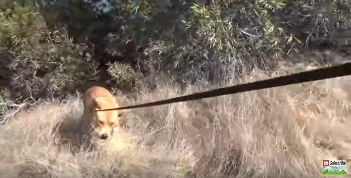 茂みから出る犬