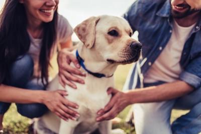 犬を可愛がっている男女