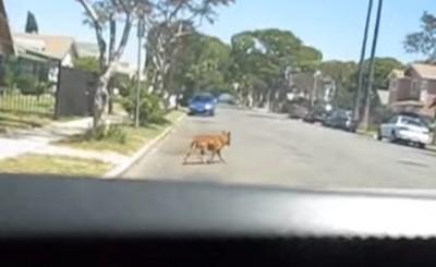 道路上の犬