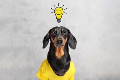 頭に豆電球が浮かぶ犬