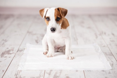 トイレする犬