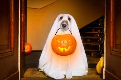 仮装する犬