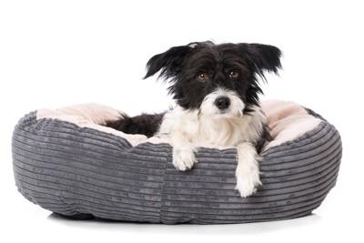 犬用ベッドに座る犬