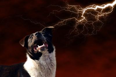 雷に驚く白黒の犬