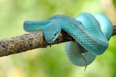 木に巻きつくヘビ